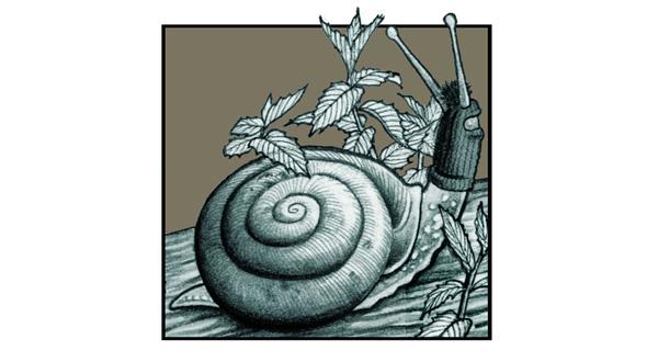 zapatista-snail